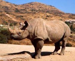 Носорогов в Индии будут охранять вооруженные бойцы