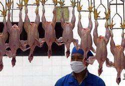 Минэкономразвития обвинило птицеводов в резком подорожании их продукции