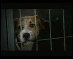 Компания Pedigree запустила социальный ролик о бездомных собаках (видео)