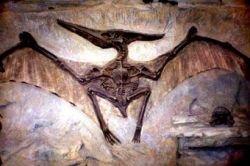 В Китае обнаружен ранее неизвестный вид динозавров