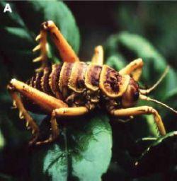 Глобальное потепление сделает насекомых более прожорливыми