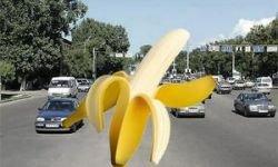 Автомобили будут заправлять банановым топливом