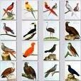 В Турции результате пожара в заповеднике погибли сотни редких птиц