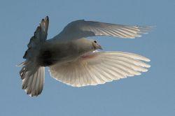 В Магнитогорске - нашествие голубей