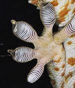 Ученые объяснили удивительные свойства лап ящерицы