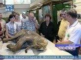 Детёныша мамонта будут изучать петербургские учёные