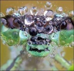 Макрофотографии насекомых от Мартина Амма (фото)