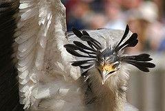 Во Вьетнаме распространяется вирус птичьего гриппа