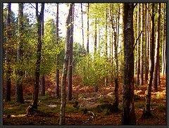 Вырубка лесов делает человека беззащитным перед инфекционными заболеваниями
