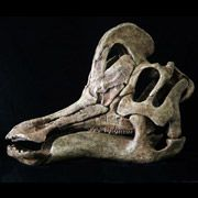 """Открыт новый вид травоядного динозавра, обладавшего незаурядными \""""музыкальными\"""" способностями"""