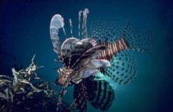 Создается крупнейший в мире морской заповедник