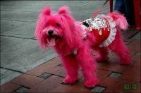 Владелицу собачьего питомника оштрафовали на 65 тысяч крон за отказ продать щенка лесбиянке