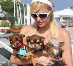 Пэрис Хилтон построила особняк для своих собачек