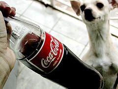 Стоит ли пить кока-колу?