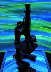 Германские ученые: Закон об исследовании стволовых клеток надо изменить