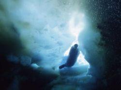Глобальное потепление угрожает уникальному морскому миру Антарктики. Туда могут переселиться акулы