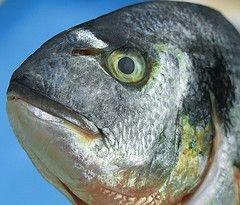 В прибрежных городах России появятся рыбные биржи