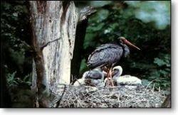 В Колумбии появился птичий заповедник