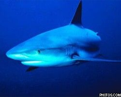 """Ученые открыли на дне моря \""""кафе белых акул\"""""""