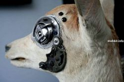 Животные-киборги - очень странная дизайнерская коллекция (фото)