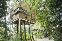 Самое удивительное жилье на деревьях (фото)