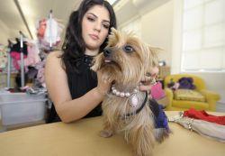Бренд Little Lily разработал собачью одежду для вручения премии Оскар (фото)