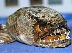 В британской реке завелся опасный хищник