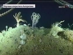 На дне Антарктиды найдены неизвестные науке существа