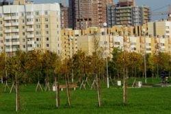 В Москве посчитают все деревья и кусты