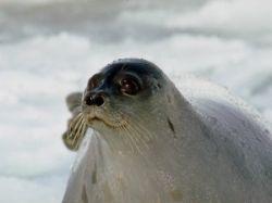 В Белом море началось образование льда