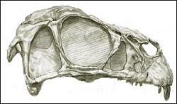 На востоке Китая найдены останки ранее неизвестного динозавра