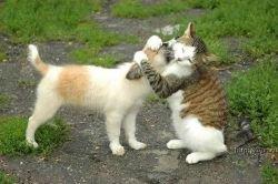 """Во Франции вышла \""""Камасутра\"""" для кошек"""