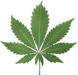 В Америке задержан старик с партией марихуаны на миллион долларов