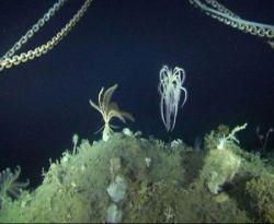 Множество новых видов живых организмов обнаружено в Антарктике (фото)