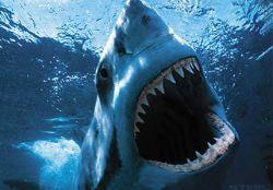 Акулы - двигатель туризма