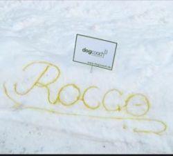 Креативная реклама школы по дрессировке собак (фото)