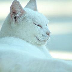 Сонливость - предвестник сердечного приступа