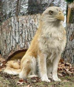 Новые виды животных, созданные с помощью Photoshop (фото)