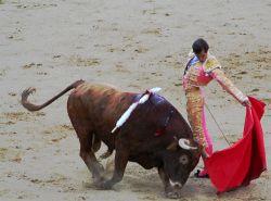 В США клонируют лучших быков для корриды