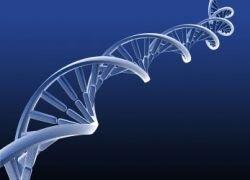 Найден ген, отвечающий за потерю волос