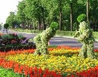 Цветочная Олимпиада