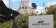 В Австралии бывшая китобойня стала музеем