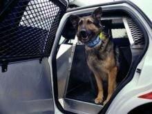 Немецких полицейских собак обуют в пластмассовые ботинки