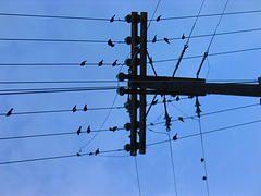 Сотовые вышки - убийцы птиц