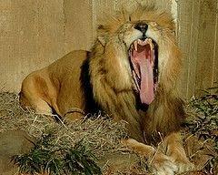 Пражский зоопарк: беременным и высоким вход бесплатный