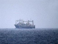"""Защитники природы установили \""""жучки\"""" на японские китобойные суда"""