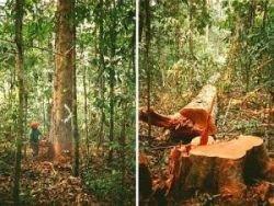 Бразильские полицейские противостоят вырубке лесов Амазонии
