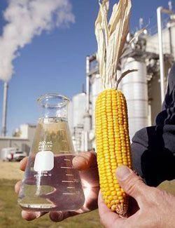 В России будут производить биоэтанол