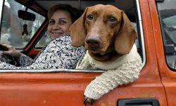 Смешная собачья одежда (фото)