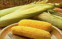 Ученые расшифровали геном кукурузы